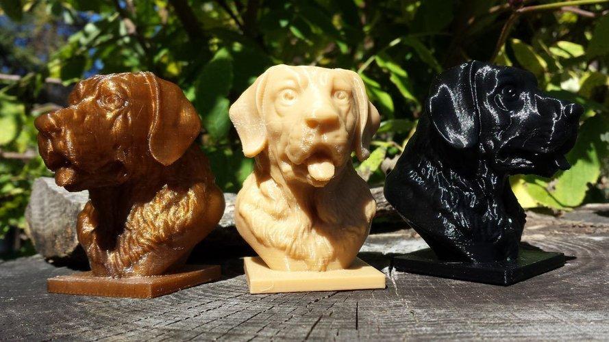 Best 3D designs pinshape labrador bust