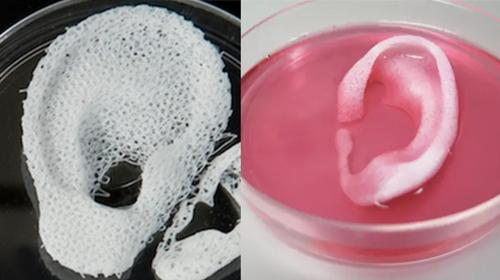 bio printing 3d-printing human corneas human corneas have been 3d-bioprinted using a specially designed bio-ink containing corneal cells events all 31 may startup village 2018.